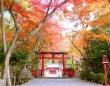 大原野神社ライトアップ「光と水」実行委員会のプレスリリース画像