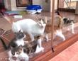 猫たちのハッピーエンディング!足の悪い母猫と子猫たちが幸せに暮らす「今」をご報告