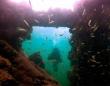 メキシコ沖の沈没船は捕らえたマヤ人を運ぶ奴隷船だったことが判明(メキシコ)