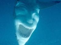 悪魔を宿してしまったのか?不敵に笑っているようにみえるサメの画像が海外で話題に!(オーストラリア)