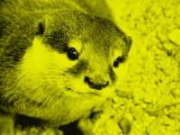 (C)RATT_ANARACH / Shutterstock