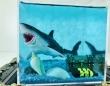 ホントに海で泳いでるみたい...! 身近なアイテムを使った「サメのプラモの飾り方」に反響