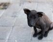 「道で骨折した犬を見つけ、動物病院へ。家中からかき集めたお金を見て、獣医は『全然足らないけど...』」(兵庫県・40代女性)