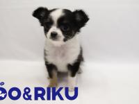 有限会社 Coo&RIKUのプレスリリース画像