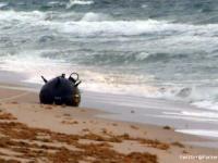 アメリカの海岸に謎の球体が打ち上げられる。その恐るべき正体がわかるとビーチは閉鎖の事態に