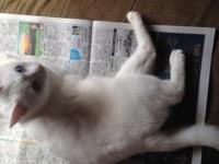 「若者の新聞離れ」は本当? 新聞を購読している一人暮らし大学生は約◯割!