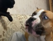 猫に話し合いは通用しないことを悟った犬