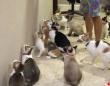 1本の猫じゃらしとたくさんの猫。個性豊かな猫たちの反応