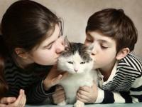 国内初、猫からの感染症で死亡(depositphotos.com)