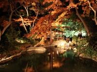 まだ間に合う! 週末に行ける関東近郊のおすすめ紅葉スポット5選