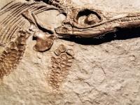 神の教えがおびやかされる....敬虔なクリスチャン一家が何世代も隠し続けていたのはイクチオサウルスの化石だった(英)