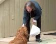 外出制限中で買い物に行けないおばあさんのために、おつかいをしてくれる隣の家の犬(アメリカ)
