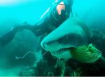 『助けてくれてありがとう』綱に絡まったサメを助けてあげると・・・。