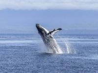リアルに存在した!クジラに飲み込まれ、吐き出された男性がその心境を語る
