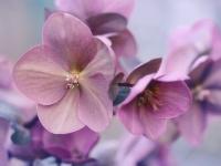 【花言葉】「恋」「好き」の意味を持つ花