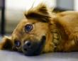 イギリスでぺットショップでの子犬や子猫の販売禁止する法案が審議中