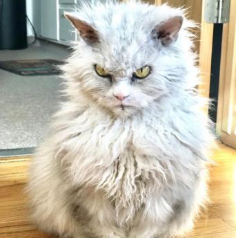 高貴なオコ顔で睨まれたい人続出。インスタ・アイドルとなった猫「ポンパス・アルバート」