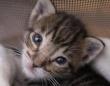 子猫?ボブキャット?小さな子猫がサボテンに登って困ってた…。子猫を拾ったReddit民が画像を投稿。みんなが知識を持ち寄って一件落着