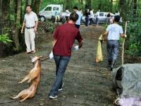息絶えた犬を引きずる鎮政府職員