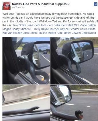 至近距離に突如毒ヘビが出現!?ドライバーが運転中の恐怖体験を告白