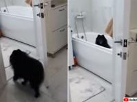 散歩の後は風呂場に直行!脚を洗ってもらうまで待っているきちんとタイプの犬
