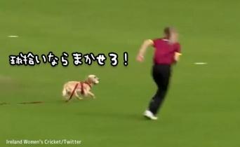 ボール拾いならおいらにまかせろ!クリケットの試合に乱入した犬、転がったボールをキャッチ