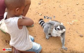 その手を止めるな!子供たちがなでるのをやめると、ジェスチャーで猛アピールするキツネザル