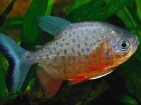 魚が喉に飛び込み窒息死寸前