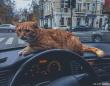 足りないのは猫!顧客快適度を高めるため、愛猫を乗せた猫タクシー(ウクライナ)