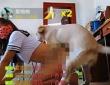 アカウント名は「欧陽馬小雲」。柴犬のような犬であることから、日本AVの影響を指摘する声もある