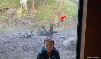 虎に「だるまさんがころんだ」は通じない。危うく今日のごはんになりかけた少年