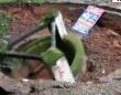 こわいこわい、地盤怖い。井戸が地面にあっという間に飲み込まれ、陥没穴となってしまう(インド)