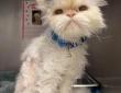 保護施設で19歳の誕生日を迎えた老猫に待ち望んでいた最高のプレゼントが待っていた