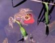 金魚はタクシーじゃないから。カエル氏、金魚の背中にしがみついて水中を移動することを覚える。