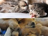 外出制限中は動物だけを見ていたい?一日中見てられる、犬と猫のYoutubeライブ配信動画まとめ