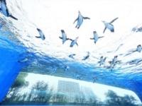 空飛ぶペンギンも! リニューアルした「サンシャイン水族館」で夏を楽しもう
