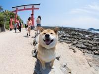 わんこは穴掘りが大好き!柴犬まるがおすすめする全国の浜辺・砂丘6選