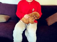 ※宇野昌磨と愛犬「トロ」。画像は宇野樹のツイッターアカウント「@jumokuno0108」より