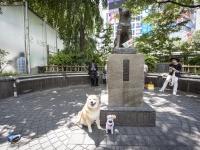 柴犬まる、都内の有名スポットをめぐる!仲良しわんこと一緒に東京観光(後編)