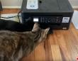 プリンターの動きに翻弄され、図らずもシンクロびっくりを連発する猫ズ