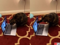離れて暮らす飼い主女性が猫とスカイプでビデオチャット。その反応が可愛すぎる