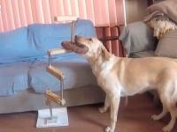 犬も科学する?かしこいラブラドール女史によるオモチャ取り出し大作戦