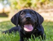 冤罪から救ってくれたのは犬。「容疑者が射殺した」と証言された黒い犬が発見され有罪判決が撤回(アメリカ)