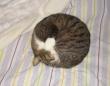 「ネコ」という物質が安定している状態がコレ?カンペキに近い円を作り上げる猫たち