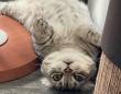 みんな違ってみんな猫。猫は7つの性格と行動特性の組み合わせで個性がわかれる
