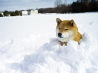 最後にホットなニュースも! 柴犬まるがお送りする「大寒」のまる知識