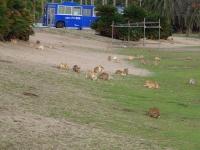 ウサギの楽園になぜネコが(ss.mc114さん撮影, Flickrより)