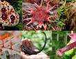 圧倒的存在感のある異様な形状をした10の植物・菌類(閲覧注意)