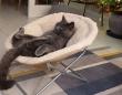 リラーックス!ソファに座り猫がまったりと「トムとジェリー」を鑑賞中