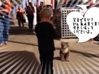 街を闊歩していたコアラ。少年にカメラを向けられ立ち止まり「こうですか?」のポーズ(オーストラリア)
